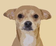 Chihuahua illustration Stock Photo