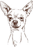 Chihuahua. Vector drawing of a head of a little dog Stock Images