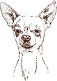 Chihuahua ilustração stock