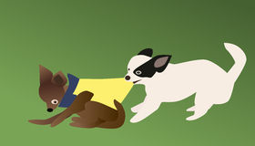 Chihuahua. Vector and illustration of chihuahua dog bite grab clothes away Stock Image