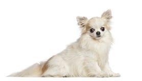 Chihuahua 4 gammala som år sitter Royaltyfri Fotografi