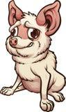 Chihuahua ansiosa de la historieta que se sienta Imagen de archivo libre de regalías
