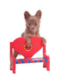 Chihuahua on the back of romantic bench Stock Photo