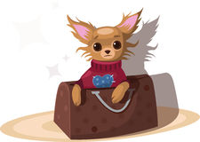 Chihuahua in the bag. Vector illustration Stock Photo