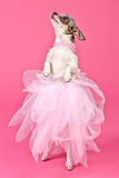 Chihuahua ballerina dancing Stock Photos