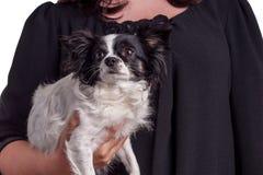 Chihuahua blanco y negro del perro de los accesorios con su dueño Imágenes de archivo libres de regalías
