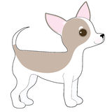 Chihuahua. A cartoon drawing of a cute little Chihuahua Royalty Free Stock Photos