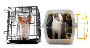 Chihuahua and cat in kennel. Chihuahua and cat closed inside pet carrier isolated on white background Royalty Free Stock Image