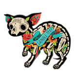 Chihuahua Colorfull Στοκ εικόνα με δικαίωμα ελεύθερης χρήσης