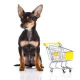 Chihuahua con la carretilla de las compras aislada en el fondo blanco Fotografía de archivo