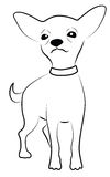 Chihuahua. Cute Chihuahua Contour Drawing isolated on white Stock Images