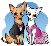 Chihuahua Date Night Royalty Free Stock Images