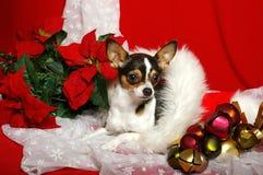 Chihuahua de la Navidad imágenes de archivo libres de regalías