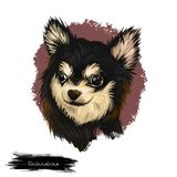 Chihuahua dog breed isolated on white background digital art illustration. Cute pet hand drawn portrait. Graphic clipart. Design realistic animal royalty free stock photography