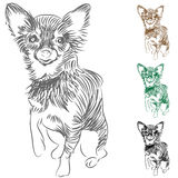 Chihuahua Dog Drawing Royalty Free Stock Photos