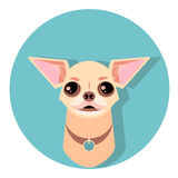 chihuahua dog face - vector illustration Stock Image