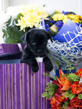 Chihuahua dog in gift box and flowers Stock Image