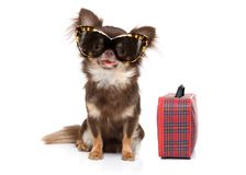 Dog on summer vacation Stock Images