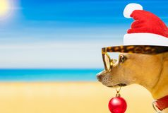 Dog watching the beach on summer christmas holidays. Chihuahua dog with santa claus dog at the beach and ocean wearing funny sunglasses and red hat  on summer Stock Photo