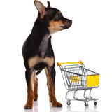Chihuahua dog. With shopping cart Royalty Free Stock Image