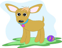 Chihuahua Dog with Toy Ball Royalty Free Stock Photo