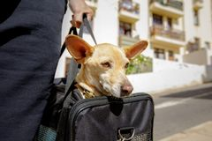 Dog in transport box or bag ready to travel stock photography
