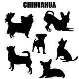 Chihuahua dog vector icons Royalty Free Stock Photos