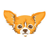 Chihuahua dog - vector illustration Royalty Free Stock Images