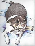 Chihuahua Drawing. A drawing of a chihuahua holding a deer antler in her mouth Royalty Free Stock Photos