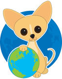 Chihuahua Earth Day Stock Images