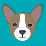 Chihuahua. In a flat design Stock Photo