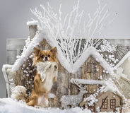Chihuahua. In front of a Christmas scenery Royalty Free Stock Photos