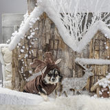 Chihuahua. In front of a Christmas scenery Stock Photography