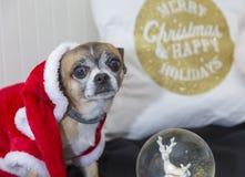 Chihuahua gekleidet als Weihnachtsmann stockbilder