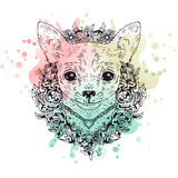 Chihuahua graphic dog, abstract vector illustration Royalty Free Stock Photos