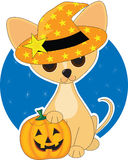 Chihuahua Halloween. A cute Chihuahua  dressed for Halloween Royalty Free Stock Photos