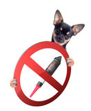 Chihuahua have a sign board between the legs with forbidden fireworks Royalty Free Stock Photos