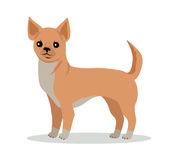 Chihuahua-Hunderasse-Vektor-flache Design-Illustration Stockfotografie