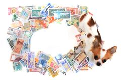 chihuahua i światu banknoty obraz stock
