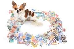 chihuahua i światu banknoty zdjęcie stock