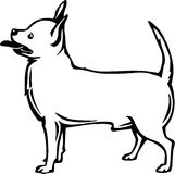 Chihuahua Illustration. Line Art Illustration of a Chihuahua Royalty Free Stock Photos