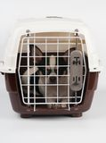 Chihuahua inside the carrier Stock Photo