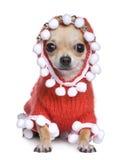 Chihuahua kleedde zich als vadercrhistmas Royalty-vrije Stock Foto's