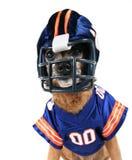 Chihuahua kleideten oben in einer Fußballuniform an stockfotografie