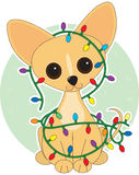 Chihuahua Lights. Chihuahua  dressed for Christmas with Christmas lights Royalty Free Stock Photography