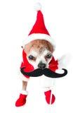 Chihuahua linda del perro en el traje de Papá Noel con el bigote falso negro en fondo blanco aislado Año Nuevo chino 2018 el año  Imágenes de archivo libres de regalías