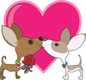 Chihuahua Love Stock Image