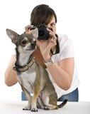 Chihuahua met een erachter fotograaf stock afbeeldingen