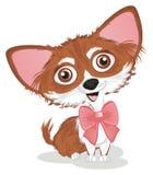 Chihuahua mit einem Bogen lizenzfreie abbildung