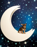 Chihuahua multi-colorida pequena na lua no fundo estrelado Foto de Stock Royalty Free